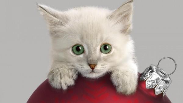 Кот, морда, рождественские украшения, любопытство, обои, скачать