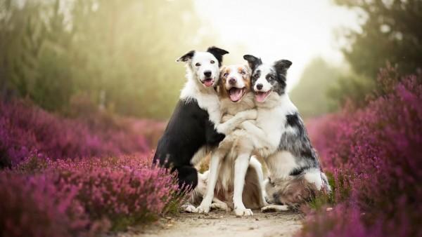 Собаки обнимаются