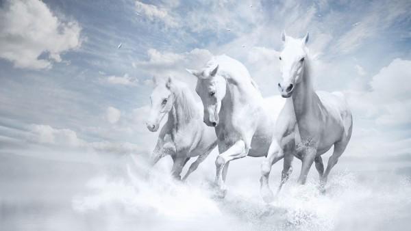 Три белых лошади бежит обои для рабочего стола