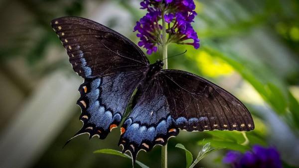 Бабочка, природа, насекомые, макро зум, высокого качества, фото