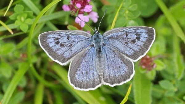 Бабочка, природа, насекомые, макро, зум, HD, фото, картинки