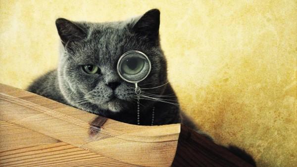 Кошка с моноклем