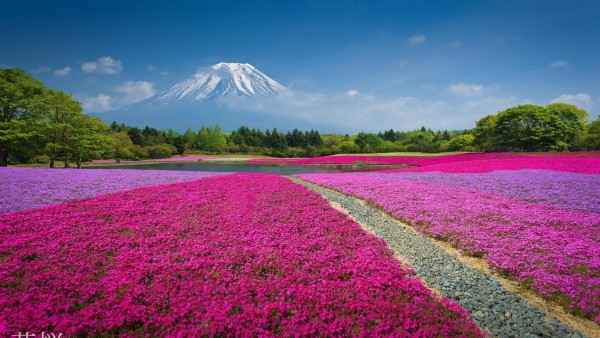 HD Китай Гора цветы природа вулкан фото скачать обои