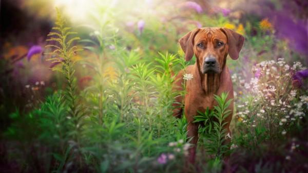 собака, морда, трава, блики, заставки