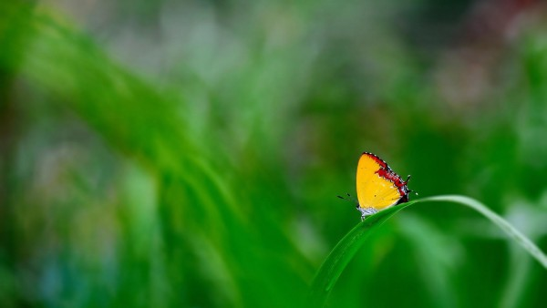 Желтая бабочка на зеленой траве макро
