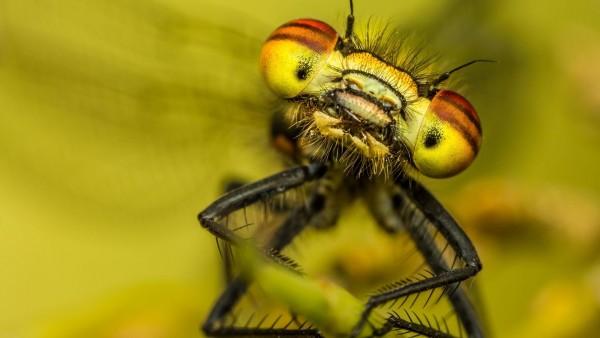 Макро заставки на рабочий стол насекомые