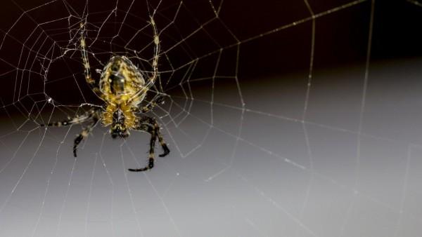 Крупным планом паук