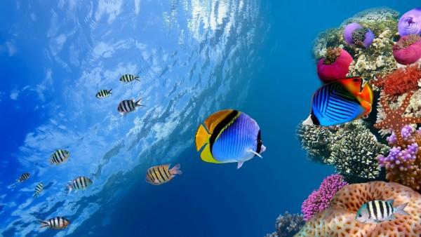 Подводный мир на комп
