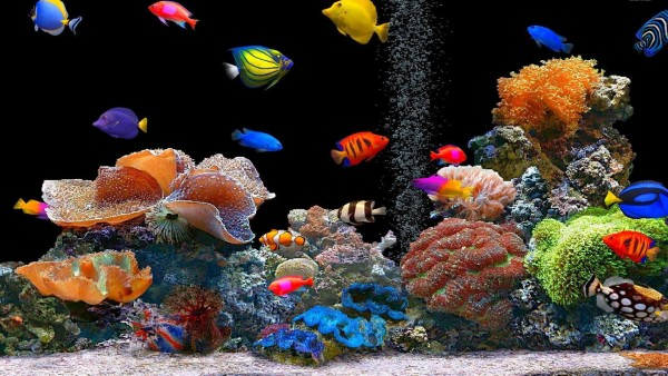Рыба бесплатно