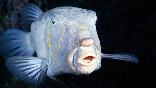 Большая рыба на рабочий стол