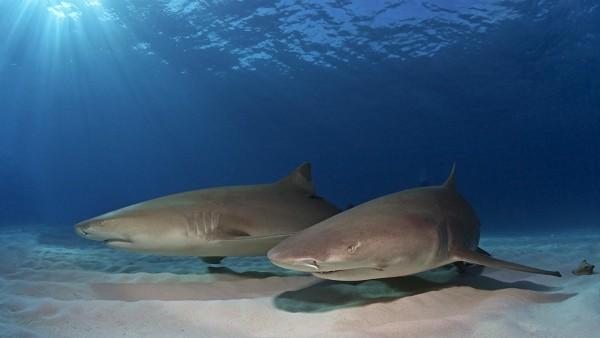 Рыбы, акулы, океан, подводный песок, солнечный свет, море