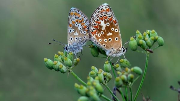 Животные, природа, бабочки,красоты, любовь, заставки