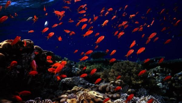 подводный мир, океан, рыбы