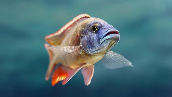 рыбка под водой HD широкоформатные