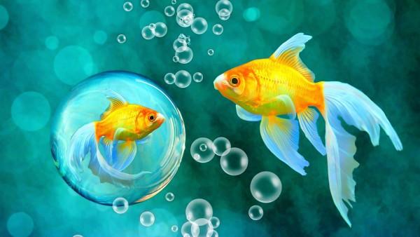 HD Пузырьки, Золотая рыбка, морские рыбы, рыбки