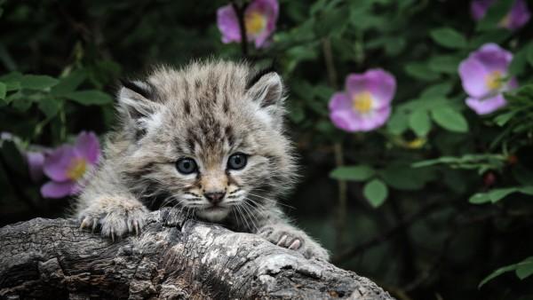 Котенок, кошка, дети, милые цветы, Best