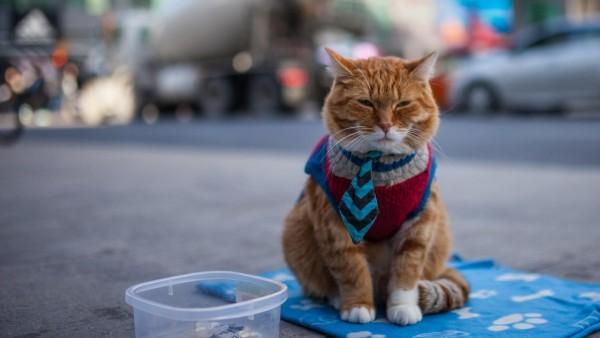 кот, нищий, одежда, рыжий, HD