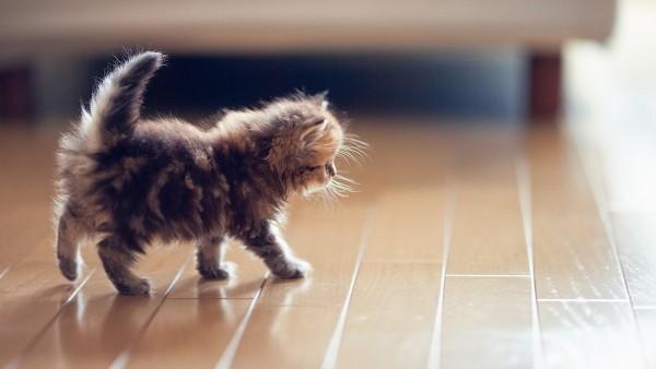 маленький котенок широкоформатные картинки