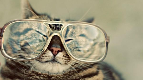 кошка в очках для журнала