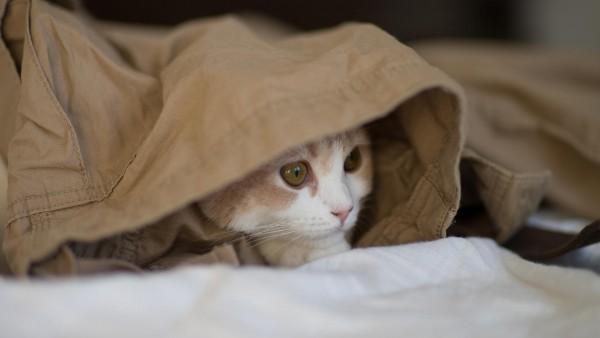 котенок прячется обои на рабочий стол