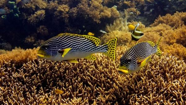 Подводные морские животные, океаническая рыба, рыбки