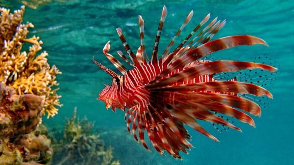 подводный, тропический океан, море, цвет, бесплатно