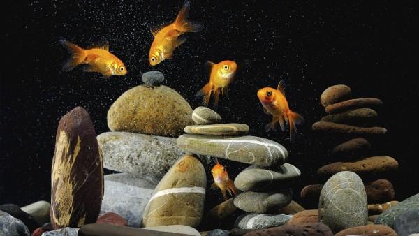 Подводный мир, Камни, Рыбы, рыбки