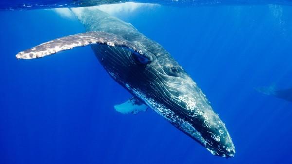 кит картинки HD