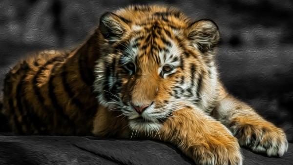 Тигр обои на рабочий стол