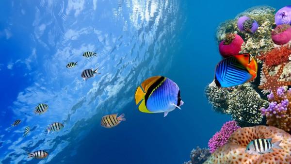 Подводные, коралловые рыбы, море, океан, картинки