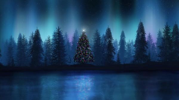 Рождественская елка в лесу
