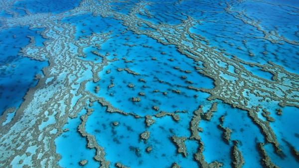 коралловые образования, Харди, риф, картинки