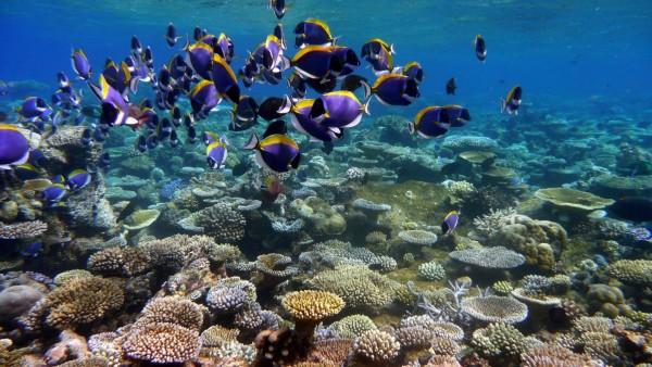 подводный океан, море, тропический