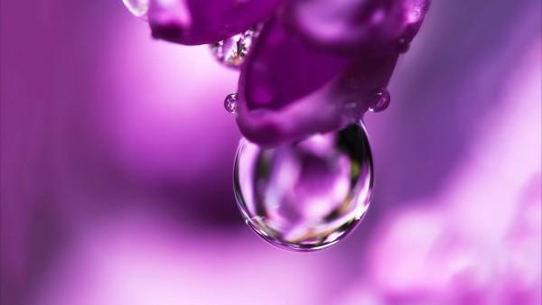 цветок, розовый, капли воды, заставки, макро