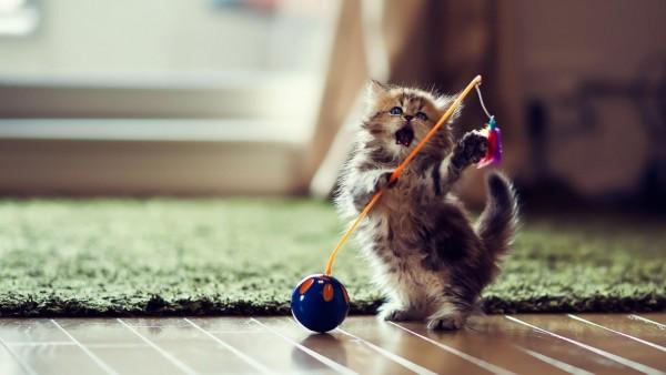смешно, милые, игривые, котята
