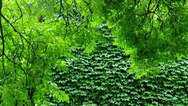 зеленая природа, деревья, растения, ветви, HD, бесплатно, обои