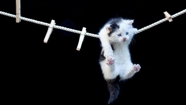 висит котенок