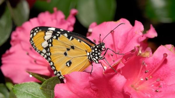 насекомое бабочка для детей