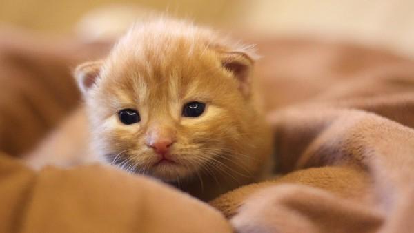 котенок hd