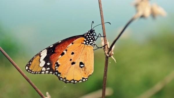 Бабочка крупным планом обои макро