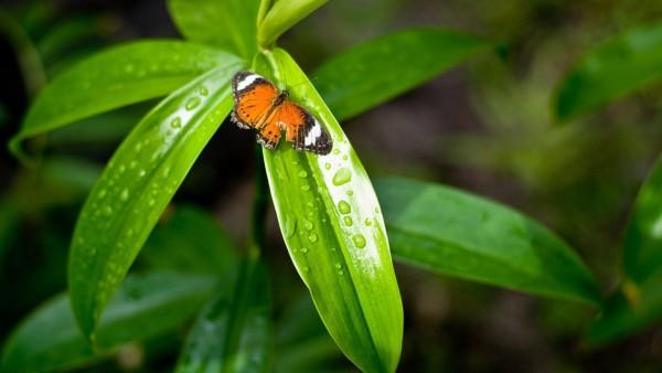 бабочка на листке растения обои макро на стол