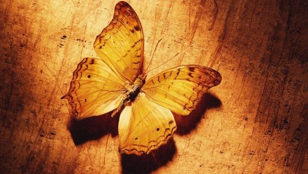 Бабочка под цвет дерева обои на рабочий стол
