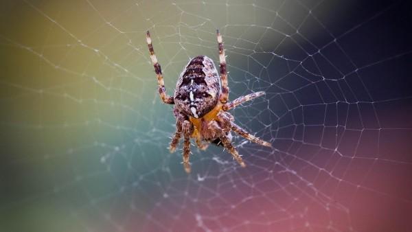 заставка паук