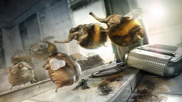 парикмахерская, юмор, шмель, стрижка, прикол, смех, пчела