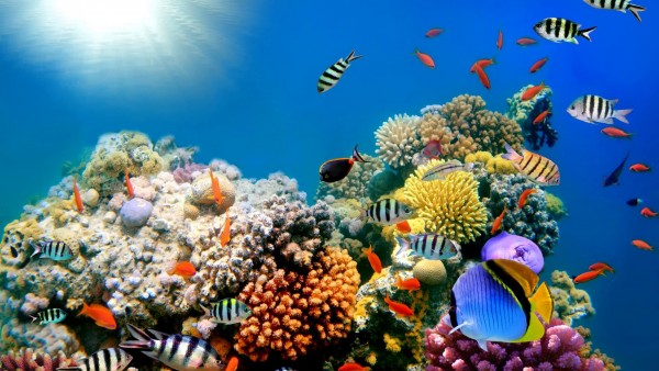 океан риф