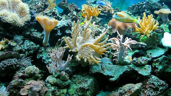 Море, Подводный океан, риф, рыба широкоформатные обои