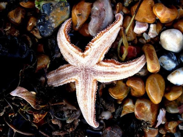 Морские звёзды, океан, море, морская жизнь, starfish