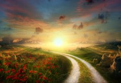 Скачать, Солнце, мак, маковое поле, путь, пейзаж, HD
