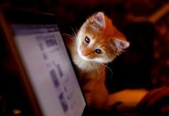 Рыжий кот в социальной сети обои