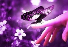 Красивая бабочка на пальце макро обои
